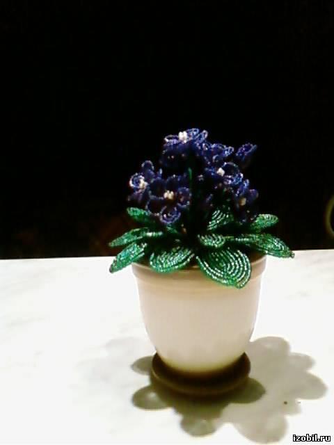 Где купить дешевые недорогие цветы